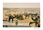 Pushkar, India #11