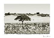 Chinguetti, Mauritania #12