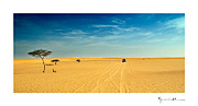 Sahara desert, Mauritania #17